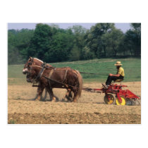 Amish Country simple people in farming with Postcard