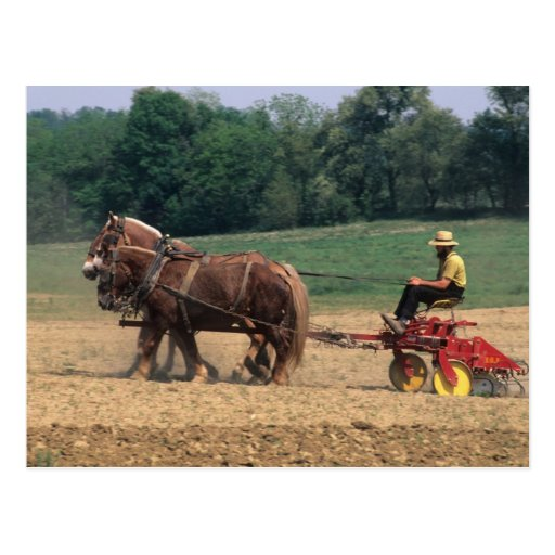 Amish Country simple people in farming with Post Cards