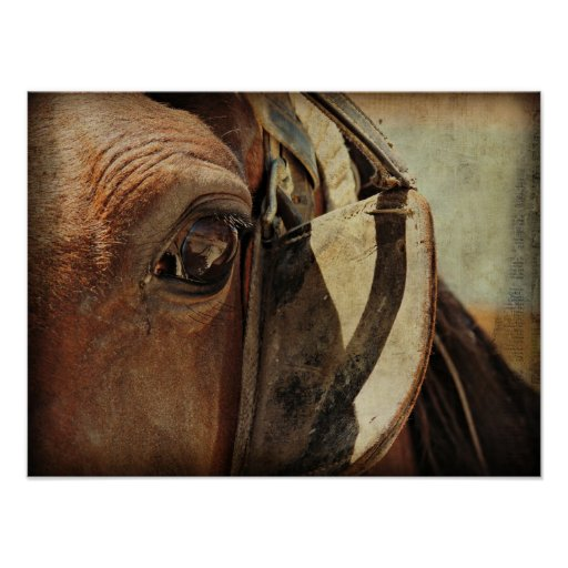 Amish Equine Posters