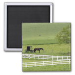 Amish farm with horse and buggy near Berlin, 2 Inch Square Magnet