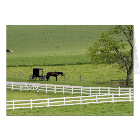 Amish farm with horse and buggy near Berlin, Card