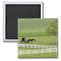 Amish farm with horse and buggy near Berlin, Magnet