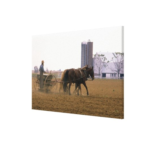 Amish farmer using a horse drawn seed planter stretched canvas print