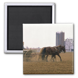 Amish farmer using a horse drawn seed planter magnet