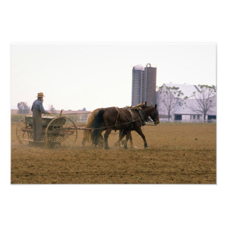 Amish farmer using a horse drawn seed planter photo print