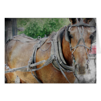 Amish Horse and Buggy Card