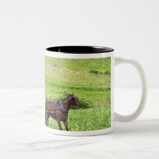Amish horse and buggy near Berlin, Ohio. Coffee Mug
