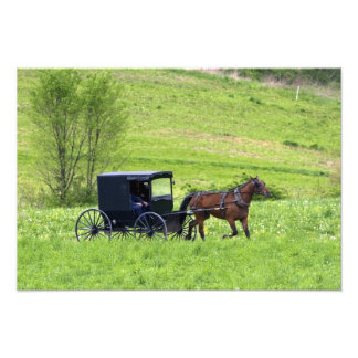 Amish horse and buggy near Berlin, Ohio. Photographic Print