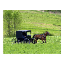 Amish horse and buggy near Berlin, Ohio. Postcard