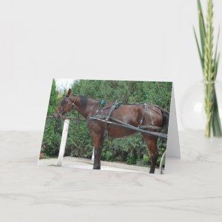 Amish Horse card