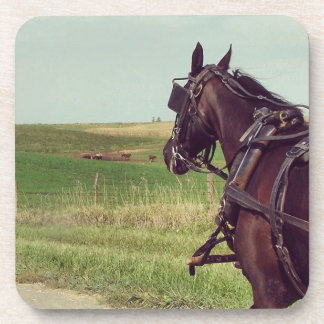 Amish Horse on a rural road Beverage Coaster
