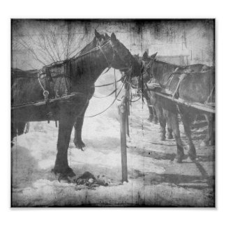 Amish Horses in Black and White Grunge Poster