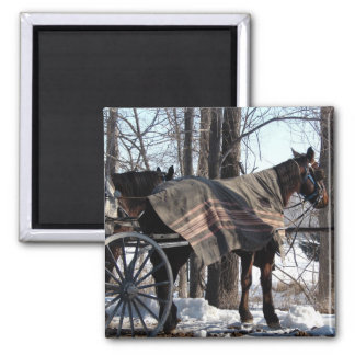 Amish Horses Waiting In Winter Magnet