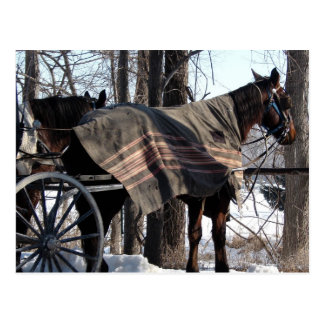 Amish Horses Waiting In Winter Postcard