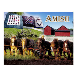 Amish Life in Lancaster, Pennsylvania Postcard