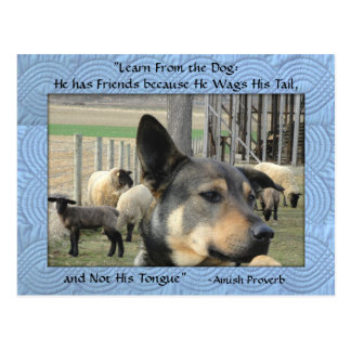 Amish Postcard. Dog Proverb. Add YOUR STORE NAME Postcard