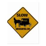 Amish que practican surf la camisa lenta de la tra postales