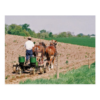 Amish Seed Spreader Postcard