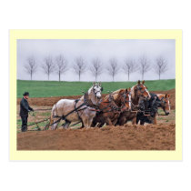Amish Team Postcard