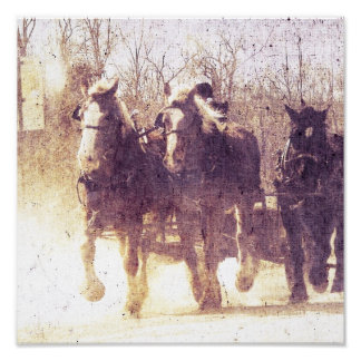 Amish Working Horses in Iowa Poster