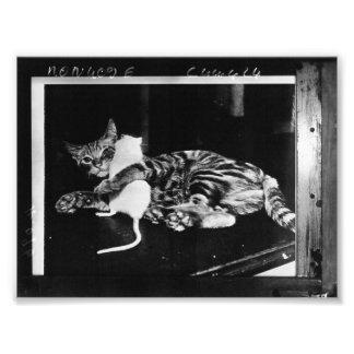 Amistad asombrosamente - gato Minnie y ratón de Fotografías