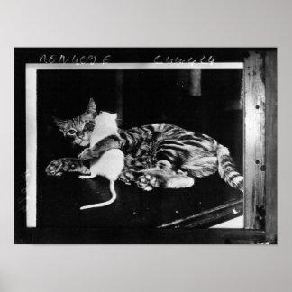 Amistad asombrosamente - gato Minnie y ratón de Póster