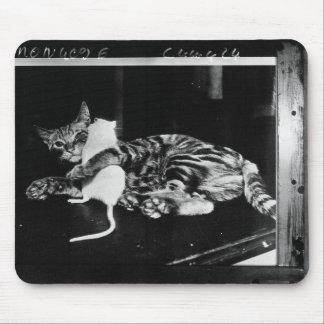 Amistad asombrosamente - gato Minnie y ratón de Tapetes De Raton