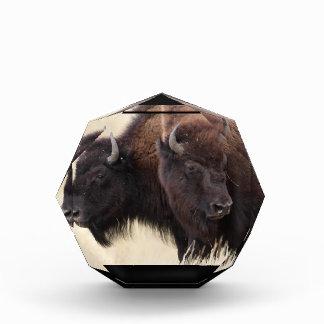 amistad del bisonte