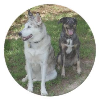 Amistad del perro de Catahoula y de Ausky Plato De Cena