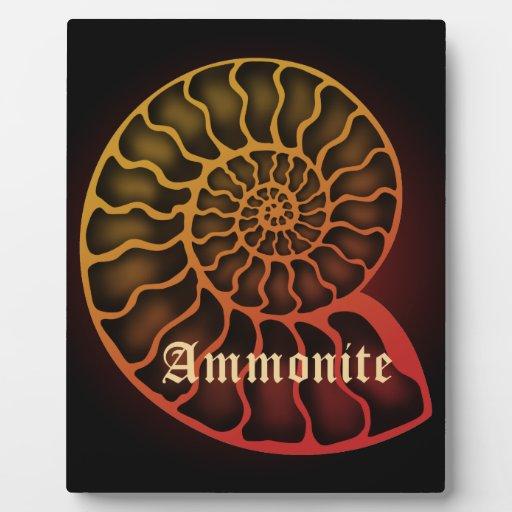 Ammonite 写真プリントプレート