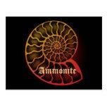 Ammonite 葉書き