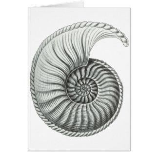 Ammonite Card