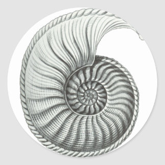 Ammonite Classic Round Sticker