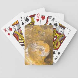 Ammonite Fossil and Other Fossils in Rock Playing Cards