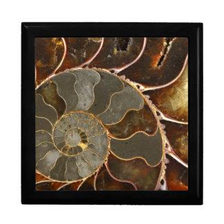 Ammonite Jewelry Box