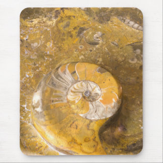 Ammonite & Other Fossils in Rock Photo Mouse Pad