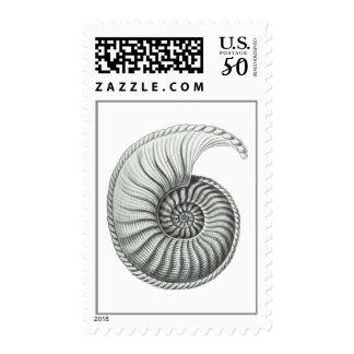 Ammonite Postage