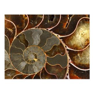 Ammonite Postcard