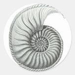 Ammonite Stickers