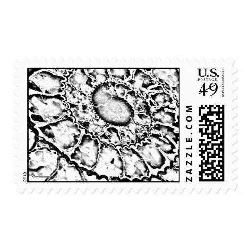 Ammonite Storm Stamp