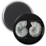 Ammonites 2 Inch Round Magnet