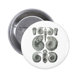 Ammonites Pinback Buttons