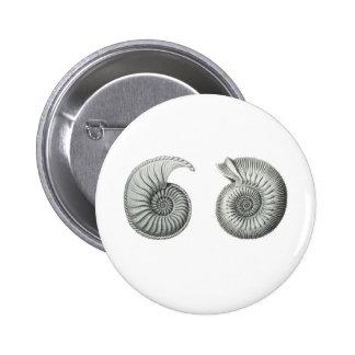 Ammonites Pins