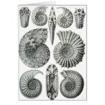 Ammonites Cards