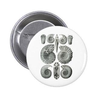 Ammonites Pinback Button
