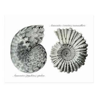 Ammonites Post Cards