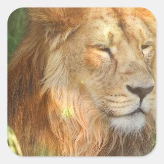 Amo a los pegatinas de los leones pegatina cuadrada