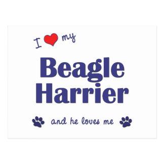 Amo a mi corredor de cross del beagle (el perro ma postal