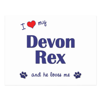 Amo a mi Devon Rex (el gato masculino) Postal