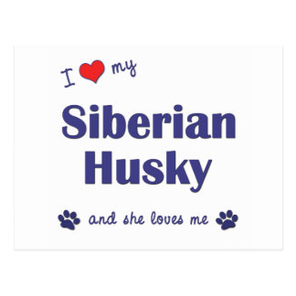 Amo a mi husky siberiano (el perro femenino) postal